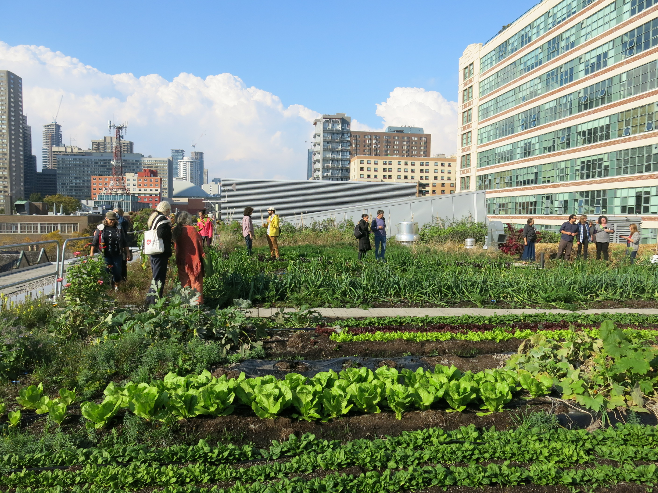 Ryerson Urban Farm - taken by June Komisar