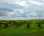 farmland cellphone photo by Josie