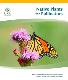 CVC_Native Plants for Pollinators