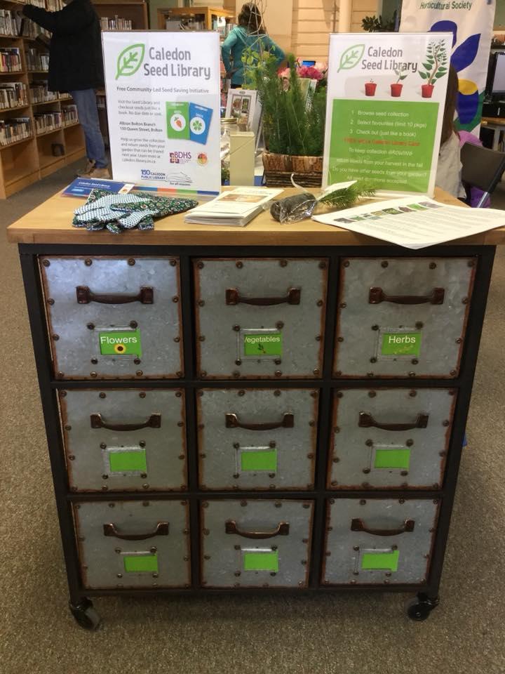 Caledon Seed Cabinet
